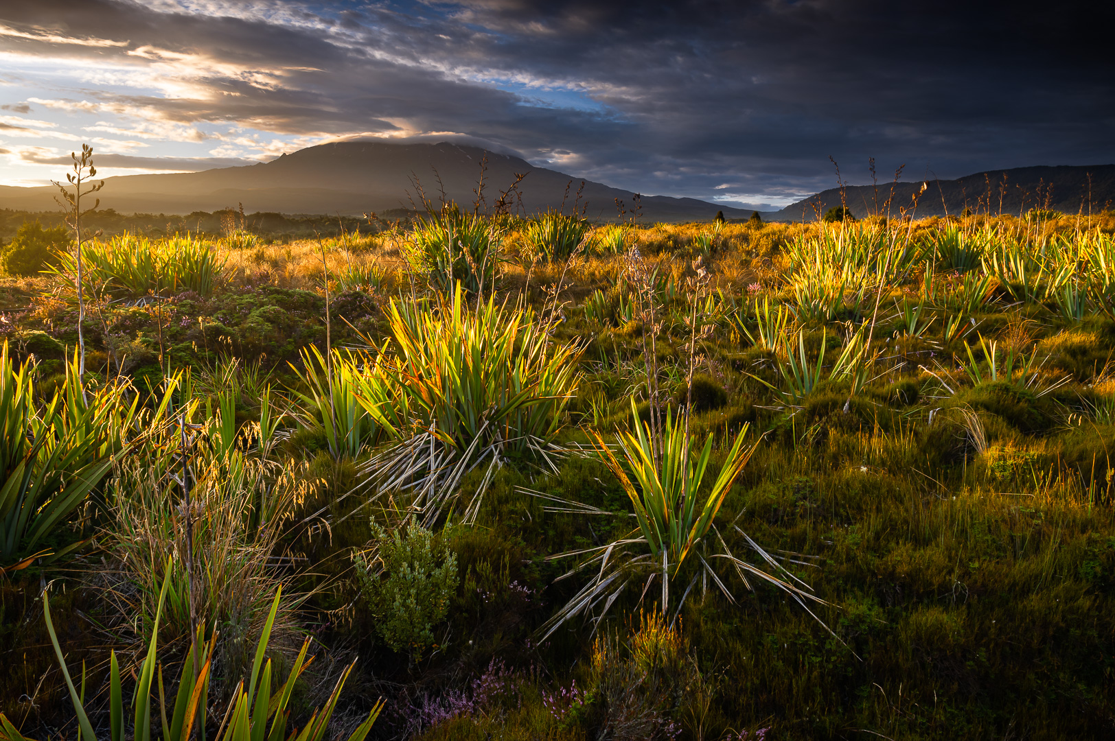 Tongariro Dawn by Adam Lack